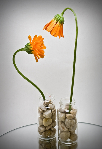 flowers--flickr